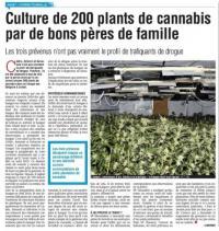 Trois prévenus devant le Tribunal correctionnel pour 200 plants de cannabis